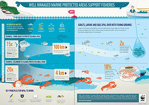 INFOGRAPHIC: How well managed marine protected areas support fisheries in temperate areas