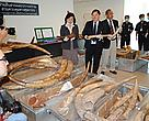 Over one tonne of ivory seized at Bangkok's airport
