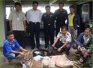 Mr. Anusit Kanjanapol (standing, centre) leads the Royal Thai Customs Officers team who confiscated ...  	© PeunPa Foundation