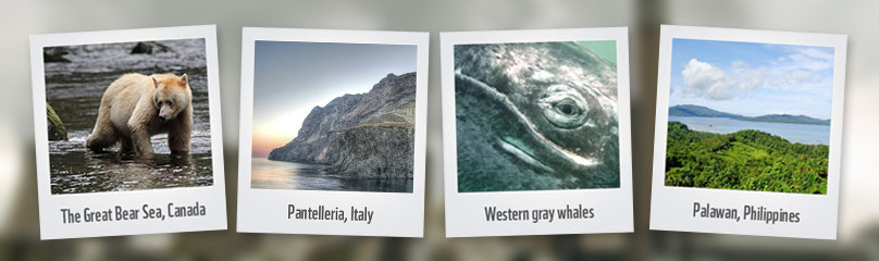 Icons threatened by fossil fuels   	© WWF Multiple Credits
