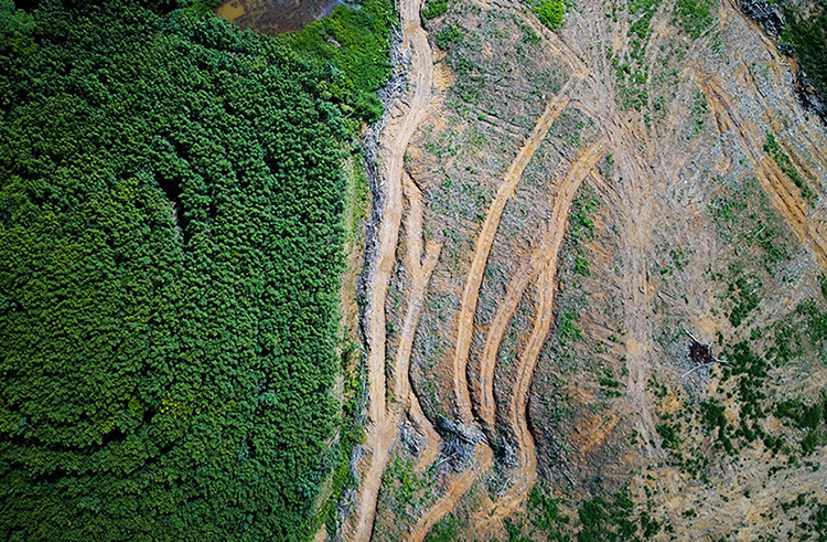 European Commission publishes long-awaited plan to address EU impact on deforestation