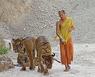monk with tigers