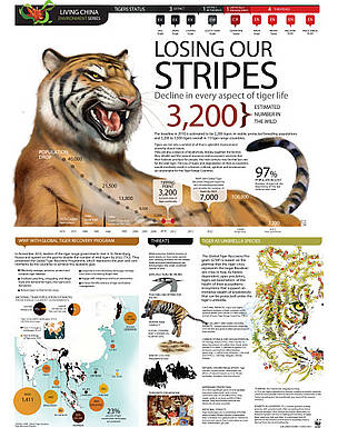 Tiger infographic World Ranger Day