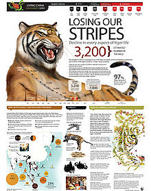 Tiger infographic World Ranger Day  	© wwf thailand
