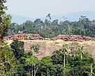 Large trees being stacked in Jambi Province after then APP supplier PT. Tebo Multi Agro cleared Bukit Tigapuluh's dense rainforest, the habitat of Sumatran tigers, elephants and orangutans.