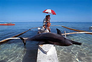 Caught dolphin on fishing boat, Pamilacan Island, Philippines.  	© WWF / Jürgen FREUND