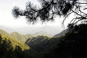 Mixed forest in the mist. Giant panda habitat. Qin Ling Mountains, Shaanxi Province, China. / ©: WWF / Michel Gunther