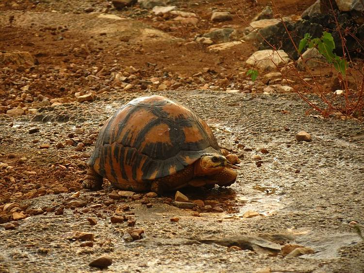 Apply the law on tortoises' traffickers!