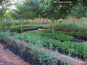 Tree seedlings in one of WWF Forest projects in Tanzania