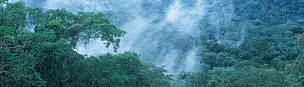 Tropical Rainforest. Moist forest, Western Congo Basin, Gabon. / ©: Martin Harvey / WWF