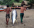 Men carrying caught tuna, Philippines.