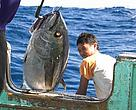 Tuna in the Indian Ocean