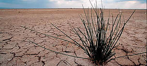 "Parched land due to drought in ""Sebkhra de Kelbia"" lagoon. Tunisia. / ©: WWF / Michel GUNTHER"