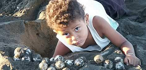 A child helps collecting olive ridley turtle (<i>Lepidochelys olivacea</i>) eggs, ... rel=