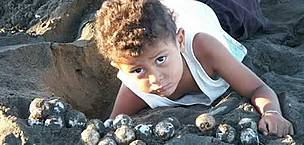 A child helps collecting olive ridley turtle (<i>Lepidochelys olivacea</i>) eggs, ... / ©: WWF-Canon / Carlos DREWS