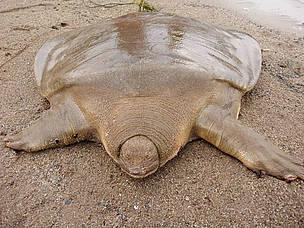 [Image: turtle_3_357204.jpg]