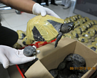 Black Spotted Turtles seized in Thailand on the 8th of  November 2013.