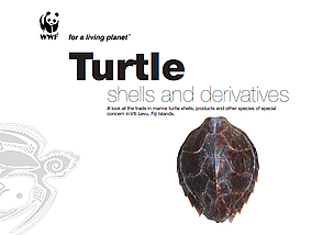 Turtle Shells and Derivatives report cover