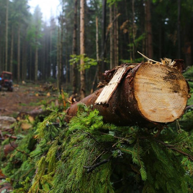 WWF's Cooperation with Interpol to Prevent Forest Crime in Central and Eastern Europe featured on ARTE TV.