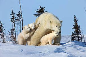 © David Jenkins WWF