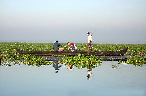 Tourists on a country boat amongst lotus blooms in Vembanad Lake, Kerala, India. rel=
