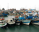 Morocco harbours the bulk of the Mediterranean's driftnet fleet, and despite a ban, driftnets are still being used by Algerian, French, Italian, and Turkish fleets. Fishing port, Morocco.