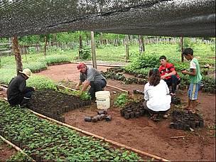 Wwf paraguay se encuentra recibiendo postulaciones para el for Manejo de viveros forestales