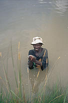 Villager catching tilapia in a fish pond, which was established with the support of WWF.  Nalusanga, Kafue National Park, Zambia.