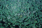 Tropical Rainforest, western Congo Basin,Gabon.