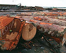 Brazil - The harvested timber is measured, identified and tagged before entering the sawmill.