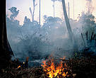 Cleared forest for ladang burning.  Kutai National Park, East Kalimantan (Borneo), Indonesia.
