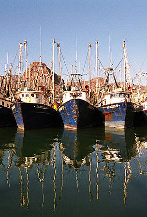Shrimp fleet in harbour.  Gulf of California, Mexico. / ©: Gustavo Ybarra / WWF-Canon