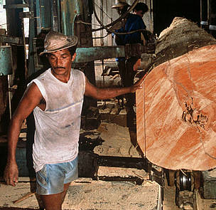 Mahogany tree trunk being sawn into planks.      © Mark Edwards / WWF