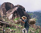On her search for the Saola in 1997 Elizabeth met villagers replanting trees in areas sprayed with Agent Orange.