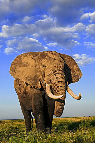 Why did EU suspend imports of some elephant hunting trophies