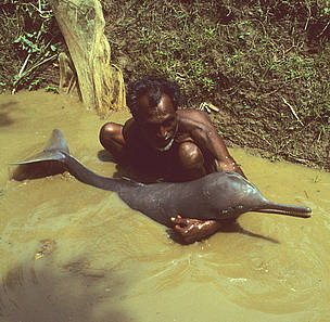 Fisherman with plataniste or Ganges river dolphin, Bangladesh  	© François Xavier Pelletier / WWF