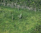 Aerial view of deforested area in the Amazon