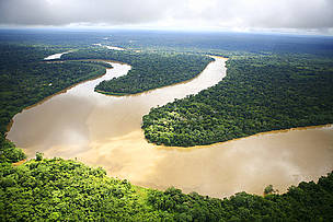Seeing the Forest beyond the trees: An integrated vision of the Amazon