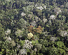 Aerial view of a piece of the Amazon forest, situated between the cities of Rio Branco and Xapuri, Acre, Brazil.