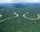 Rio Pinquen, Manu National Park, Amazon Rainforest, Peru.