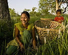 Women cutting grass in Khata, Nepal