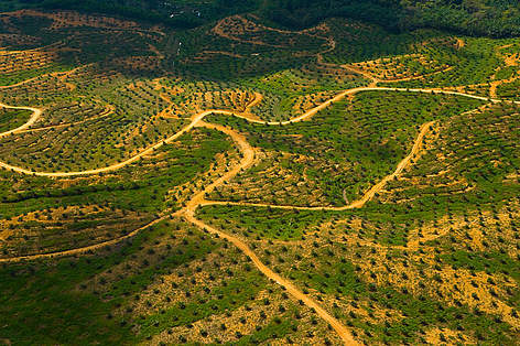 Aerial view of palm oil plantation on deforested land, Sabah, Borneo, Malaysia rel=