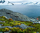 Coastal landscape with vegetation and ice, Antarctica