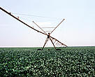 Center-pivot irrigation in a soy monoculture, Rondonópolis, Brazil.