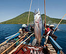 Funae fishermen catching skipjack tuna near Manado Tua using anchovies as live bait. Manado, North Sulawesi, Indonesia.