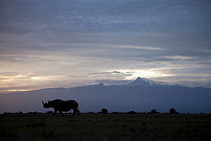 Black rhinoceros, Ol Pejeta conservancy, Kenya