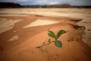 A plant grows on a mine tailing in the outskirts of Huepetuhe, a mining town of 15,000 in the heart of the Peruvian Amazon.