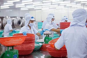 Farmed pangasius are processed at the Hung Vuong factory in My Tho city, Mekong Delta, Vietnam. From here the frozen fish are distributed worldwide.