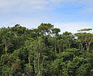 Tree tops in the Uatumã Biological Reserve in the state of Amazonas in Brazil.