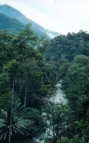Gunung Leuser National Park, Alas River Sumatra, Indonesia. / ©: John Mackinnon / WWF